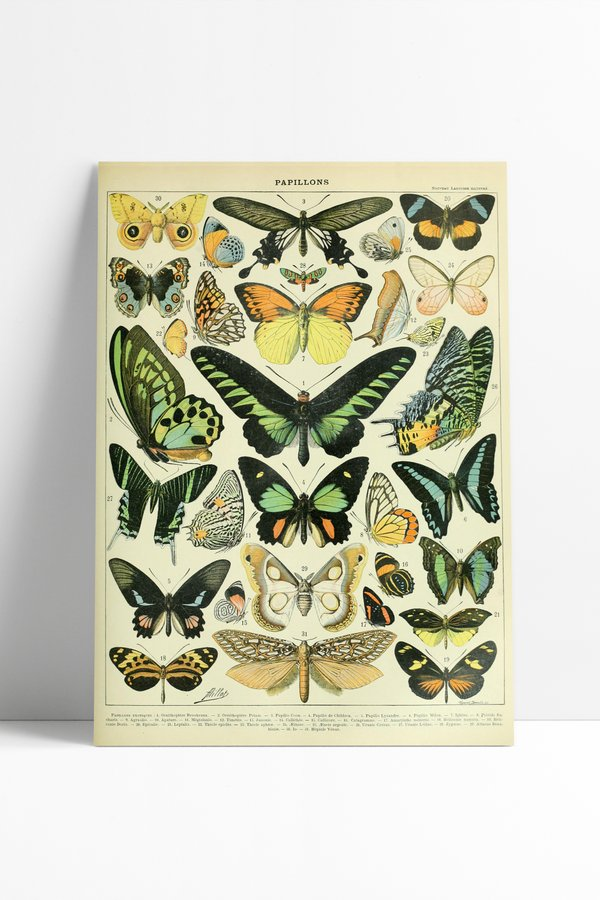 Poster Vintage Butterflies
